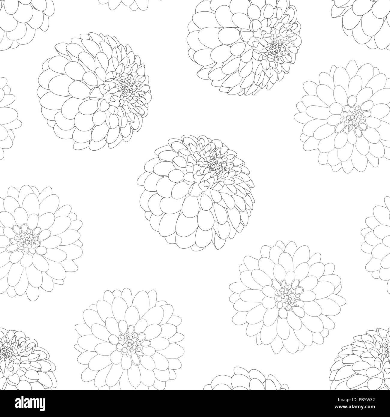 Dahlia Flower Outline White Background. Mexico\u0027s national