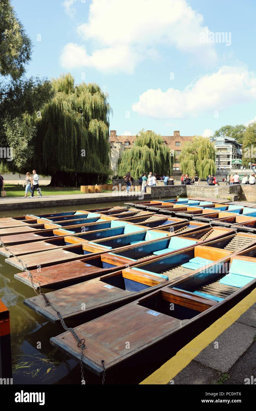 Cambridge punts lined up in river - Stock Image