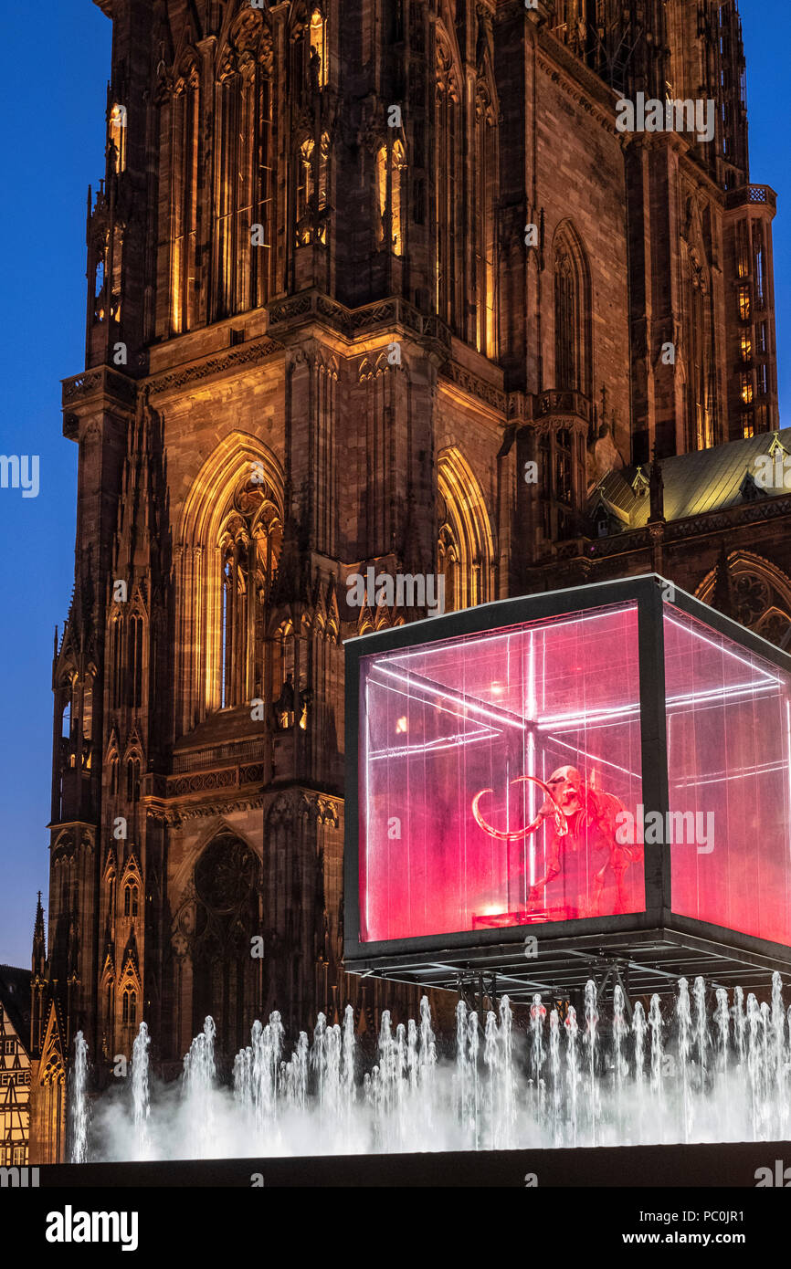Strasbourg, 12.000-year-old mammoth skeleton suspended in display case, jet water fountain, illuminated cathedral, night, Alsace, France, Europe, Stock Photo