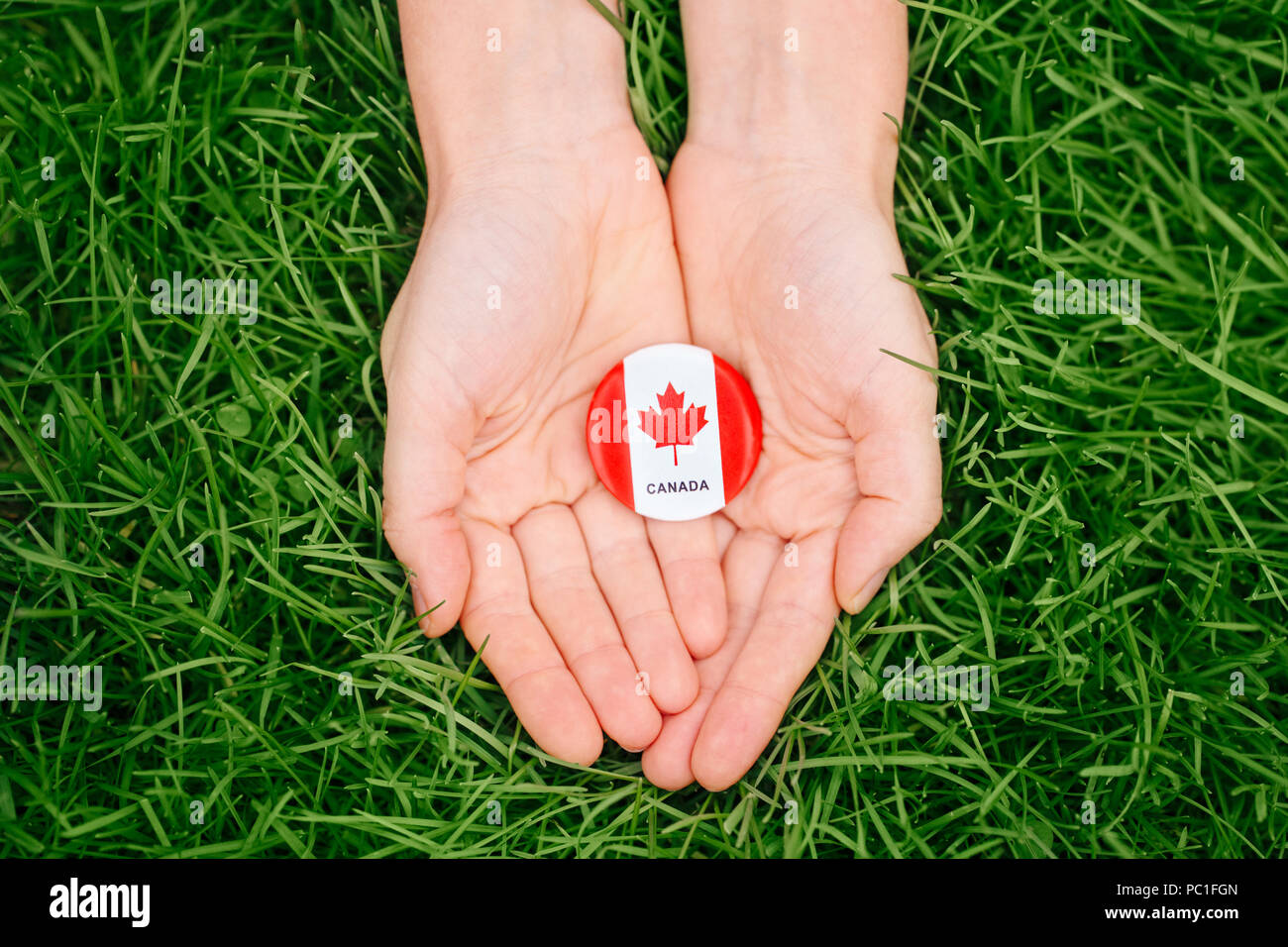 Macro closeup shot of hands palms holding round badge with red white canadian flag maple leaf, on green grass forest nature background outside, Canada Stock Photo