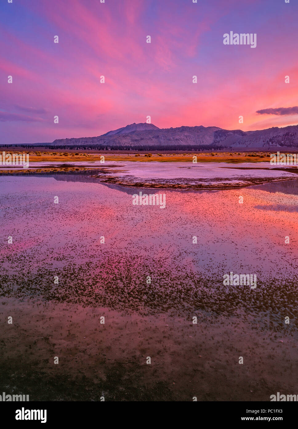 Dusk, Brineflies, Wetlands, Mono Lake, Mono Basin National Forest Scenic Area, Inyo National Forest, California - Stock Image