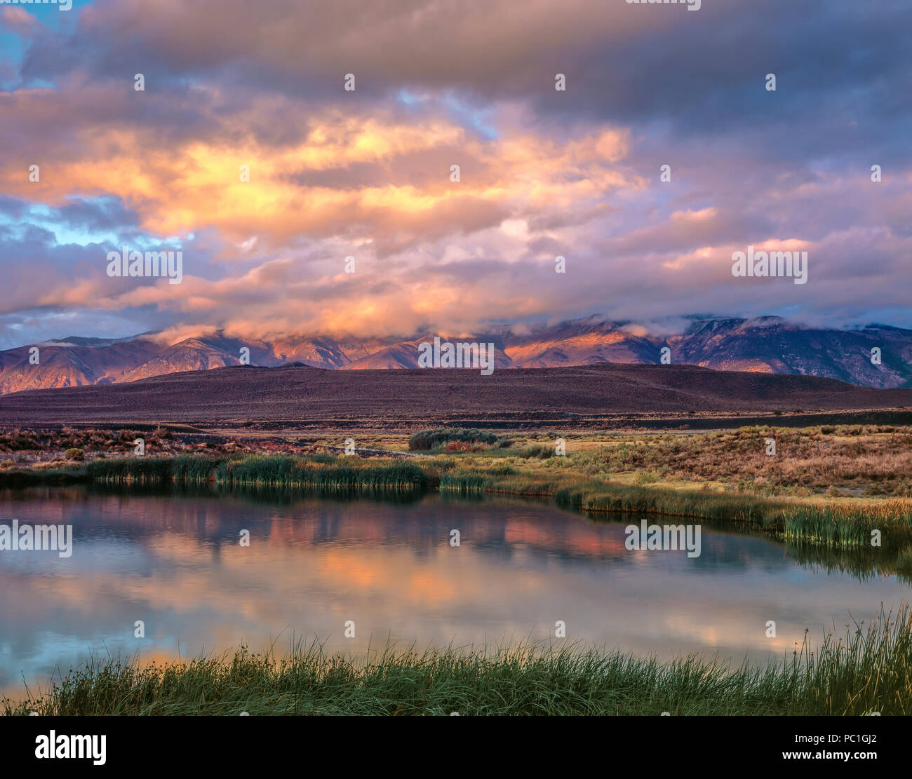 Sunrise, Wetlands, Mono Basin National Forest Scenic Area, Inyo National Forest, Eastern Sierra, California - Stock Image