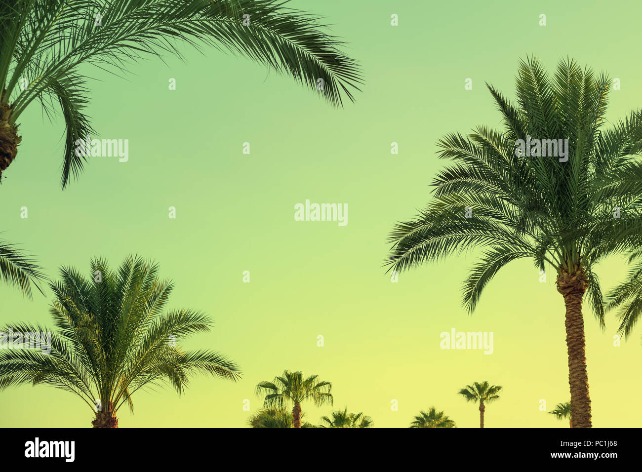 Tropical Palm Trees And Sky As Copy Space Retro Toned Trendy