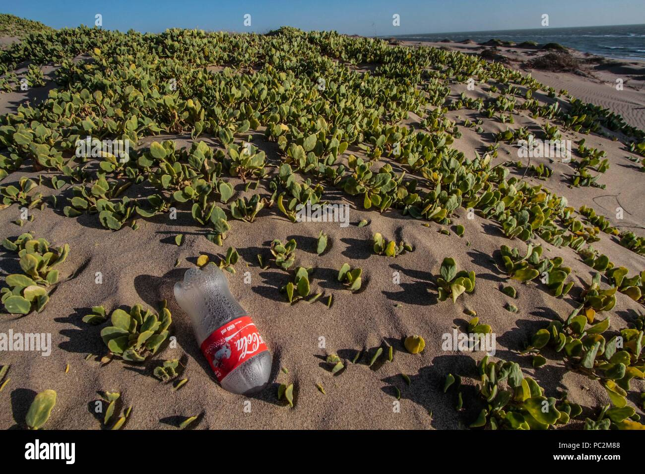 Empty plastic bottle of Coca Cola brand gas, cause of pollution and environmental impact. Sand dunes at Imalaya Beach in the vicinity of Kino Bay, Sonora Mexico. Gulf of California.   botella vacia de plastico de la marca gaseosa Coca Cola, causa de la contaminacion y afectacion al medio ambiente. Dunas de arena en la Playa Imalaya en los alrededores de bahia de Kino, Sonora Mexico. Golfo de California - Stock Image