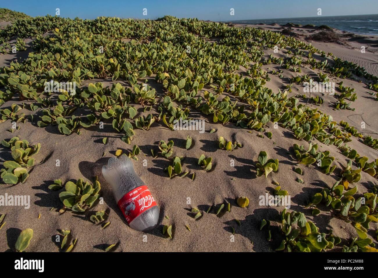 Empty plastic bottle of Coca Cola brand gas, cause of pollution and environmental impact. Sand dunes at Imalaya Beach in the vicinity of Kino Bay, Sonora Mexico. Gulf of California.   botella vacia de plastico de la marca gaseosa Coca Cola, causa de la contaminacion y afectacion al medio ambiente. Dunas de arena en la Playa Imalaya en los alrededores de bahia de Kino, Sonora Mexico. Golfo de California Stock Photo