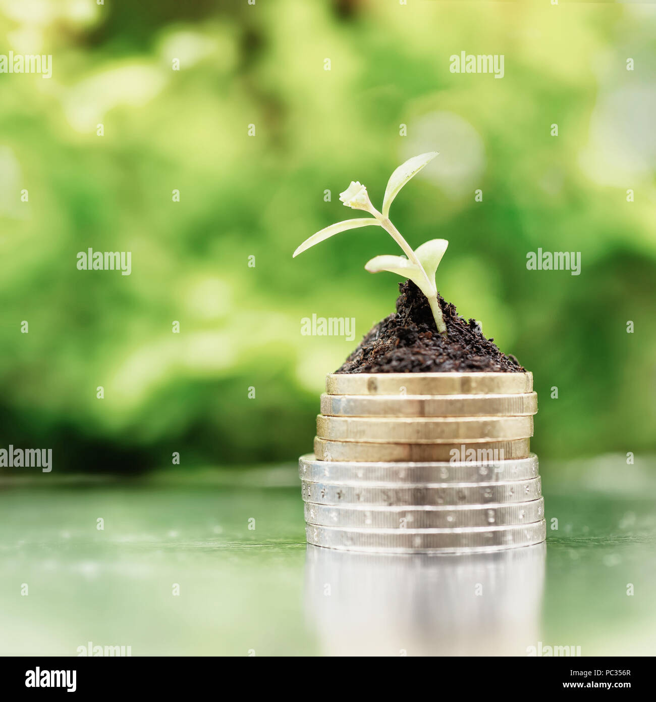 Coins in soil with young plant on green background. Money growth concept. High key filter. - Stock Image