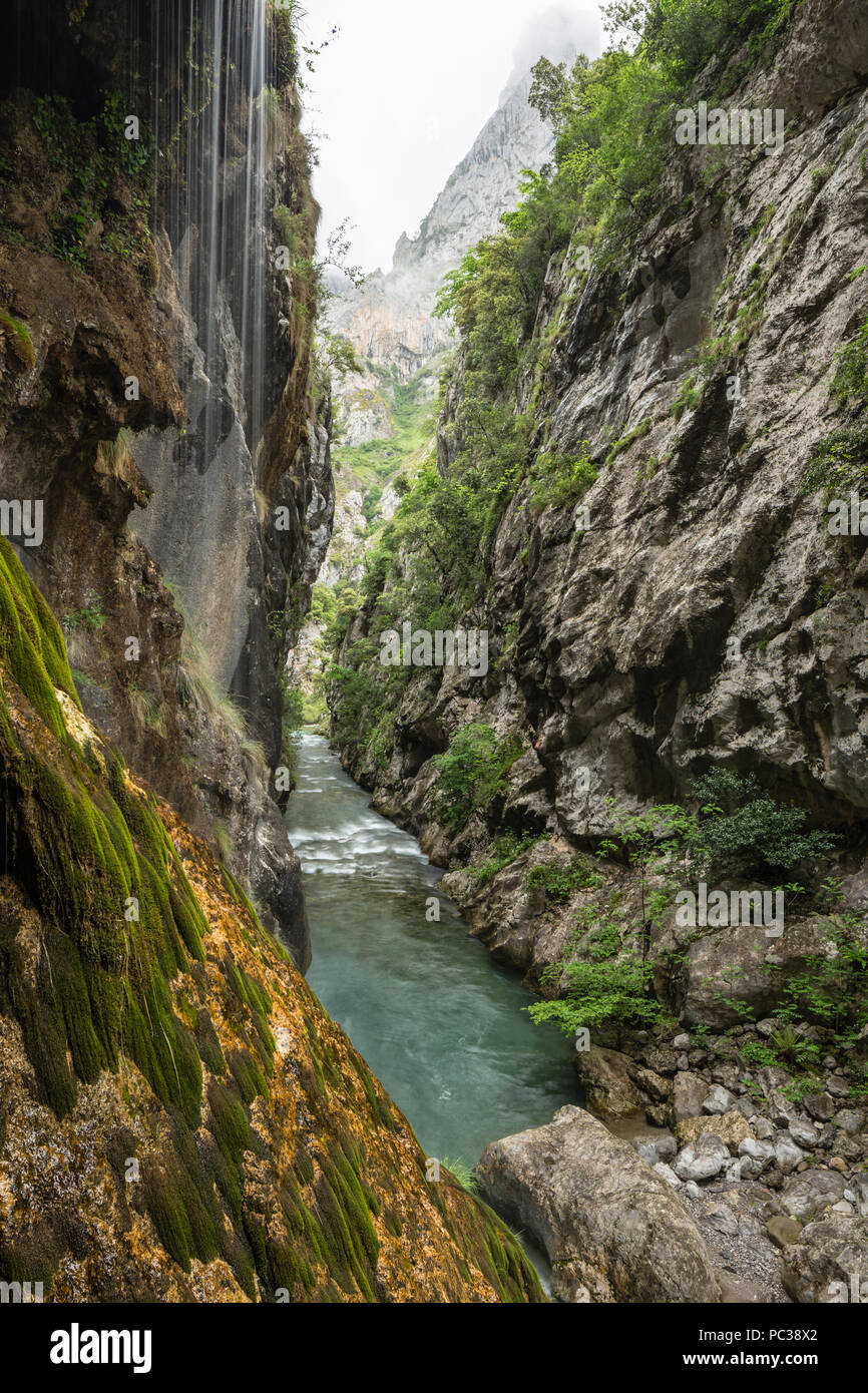 Cares river winds below sheer cliffs along the cares gorge trail, with water cascading down the cliff, Picos de Europa, Castile and León, Spain - Stock Image