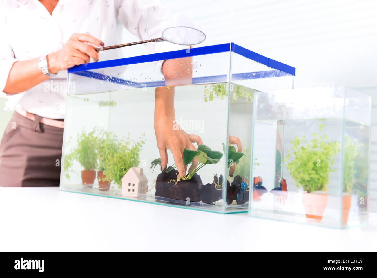 Fish Tank Home Stock Photos & Fish Tank Home Stock Images - Alamy