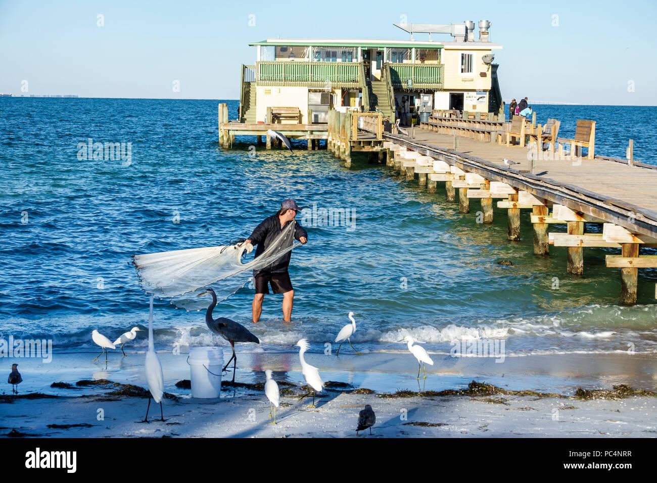 Florida Anna Maria Island Anna Maria City Pier Rod & Reel restaurant wooden pier man casting net fishing water birds egret heron - Stock Image