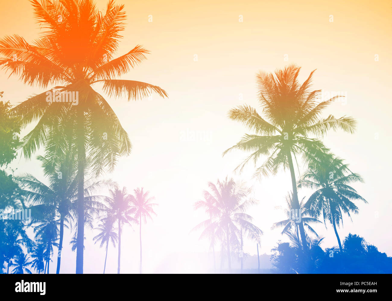 Palm tree or coconut tree at tropical coast made with vintage tones style background. - Stock Image