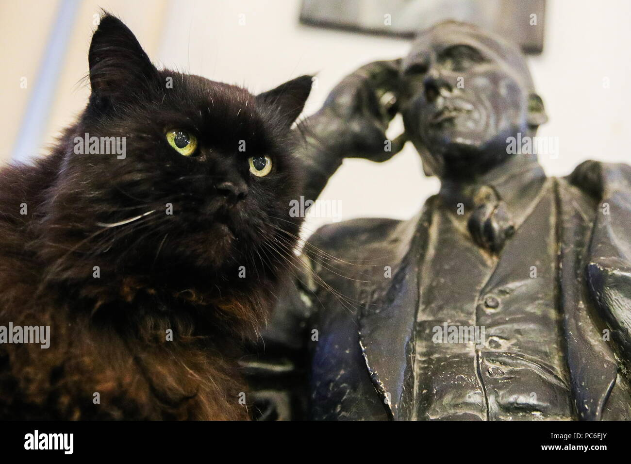 Moscow, Russia. 01st Aug, 2018. MOSCOW, RUSSIA - AUGUST 1, 2018: Begemot the Cat named after Behemoth, a character from The Master and Margarita novel by Russian writer Mikhail Bulgakov, at the Bulgakov House. The black cat was reportedly abducted from the museum and found by police on August 1, 2018. Sergei Bobylev/TASS Credit: ITAR-TASS News Agency/Alamy Live News - Stock Image