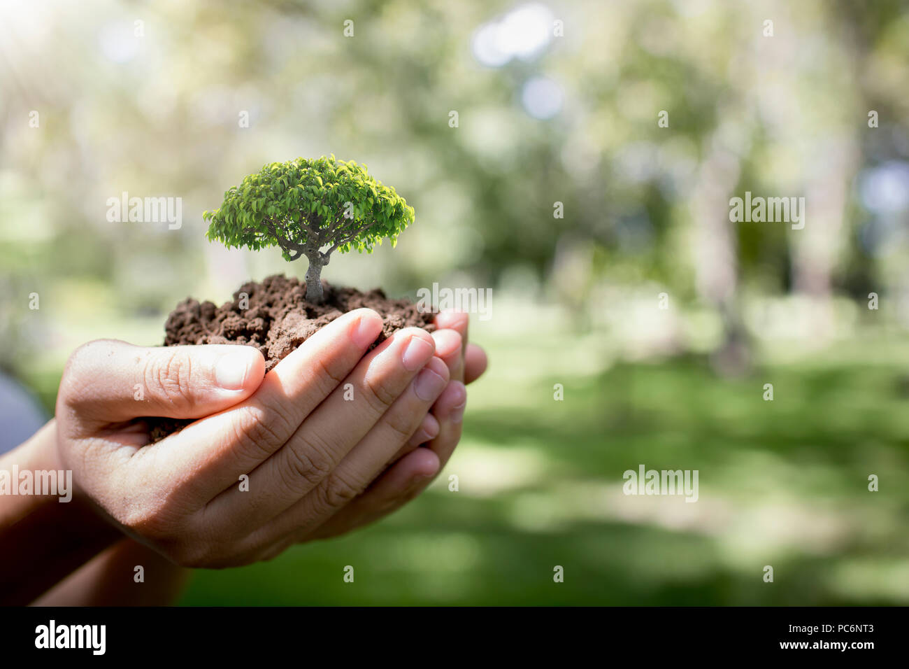 world environment day and save environment concept volunteer women