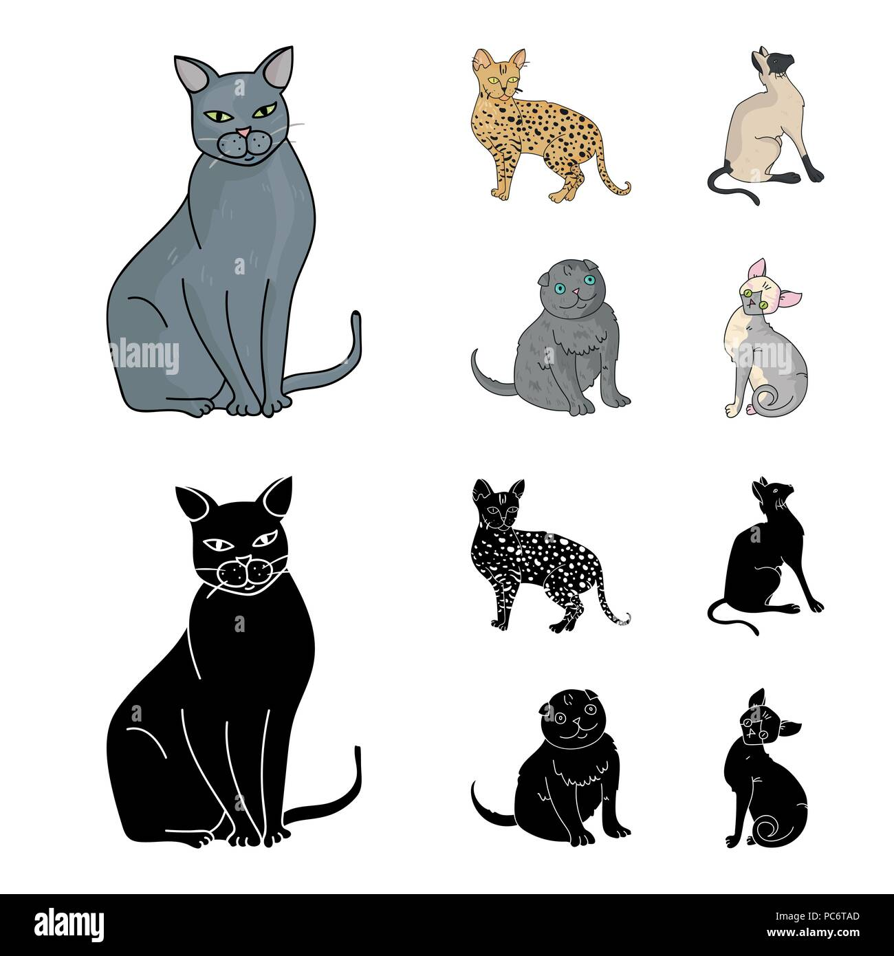 Scottish Fold Cat Stock Vector Images Alamy