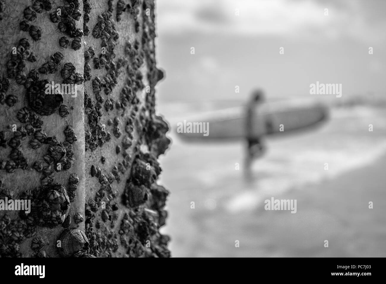 Person walking on beach with surfboard, black and white. - Stock Image