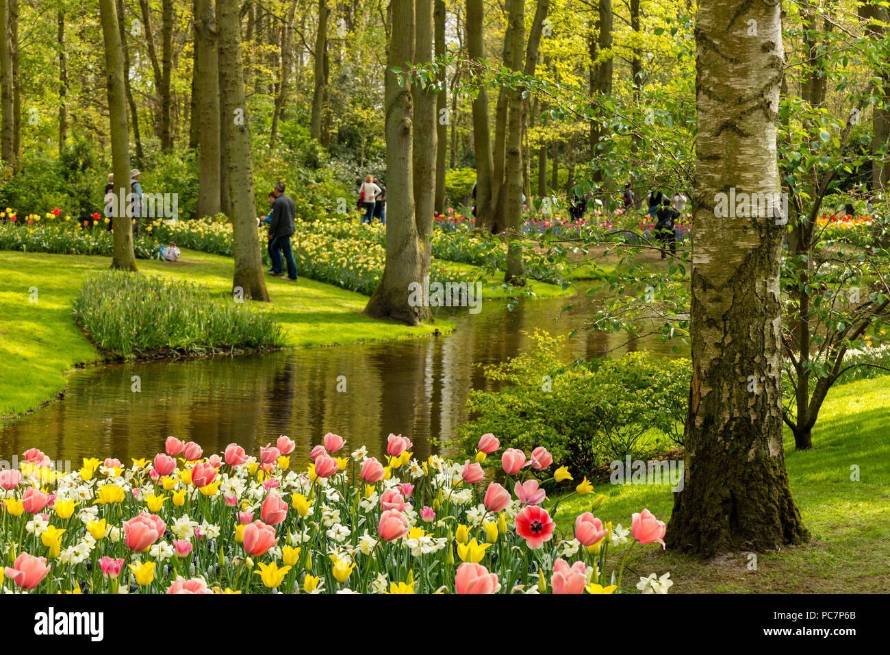 The beautiful keukenhof gardens in lisse netherlands with tulips the beautiful keukenhof gardens in lisse netherlands with tulips blooms in the foreground and grass lined spring through trees being admired by vis izmirmasajfo