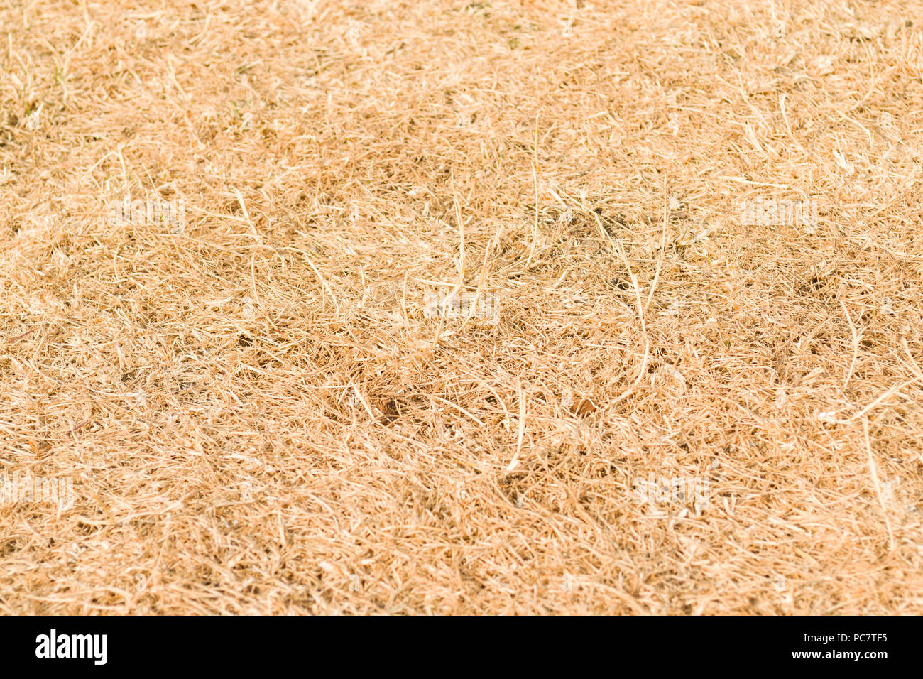 A lawn of dry orange grass due to the record Summer heatwave in the United Kingdom in 2018 - Stock Image