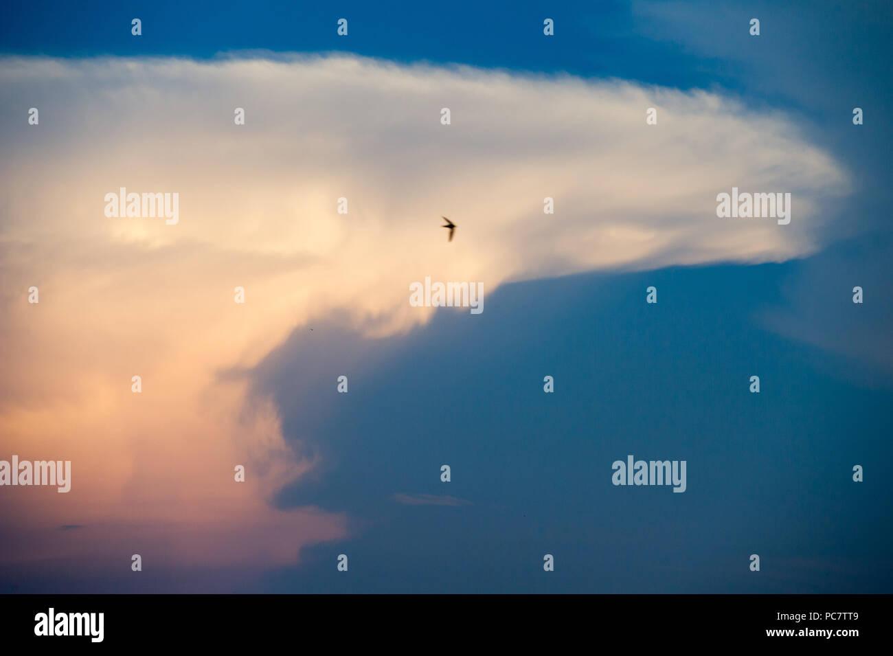 Cumulonimbus cloud in Gdansk, Poland. July 28th 2018 © Wojciech Strozyk / Alamy Stock Photo Stock Photo