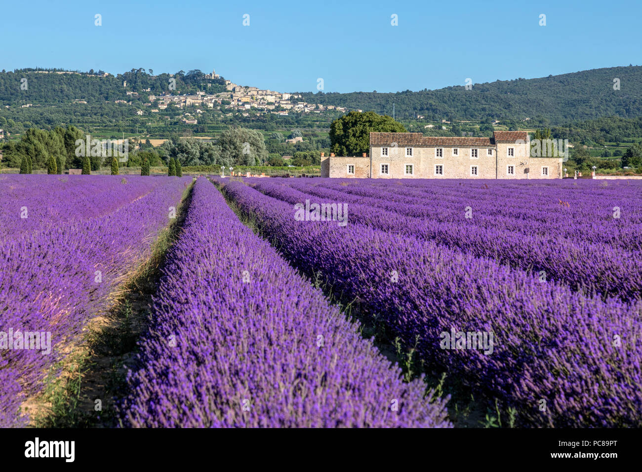 Bonnieux, lavender fields, Apt, Provence, France - Stock Image