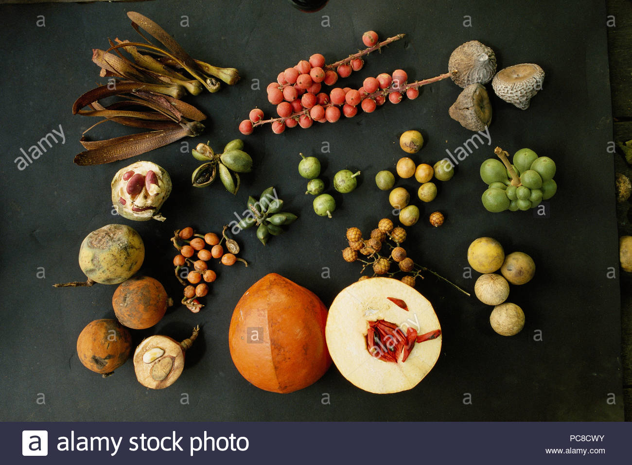Seeds and seed pods from the rain forest. - Stock Image
