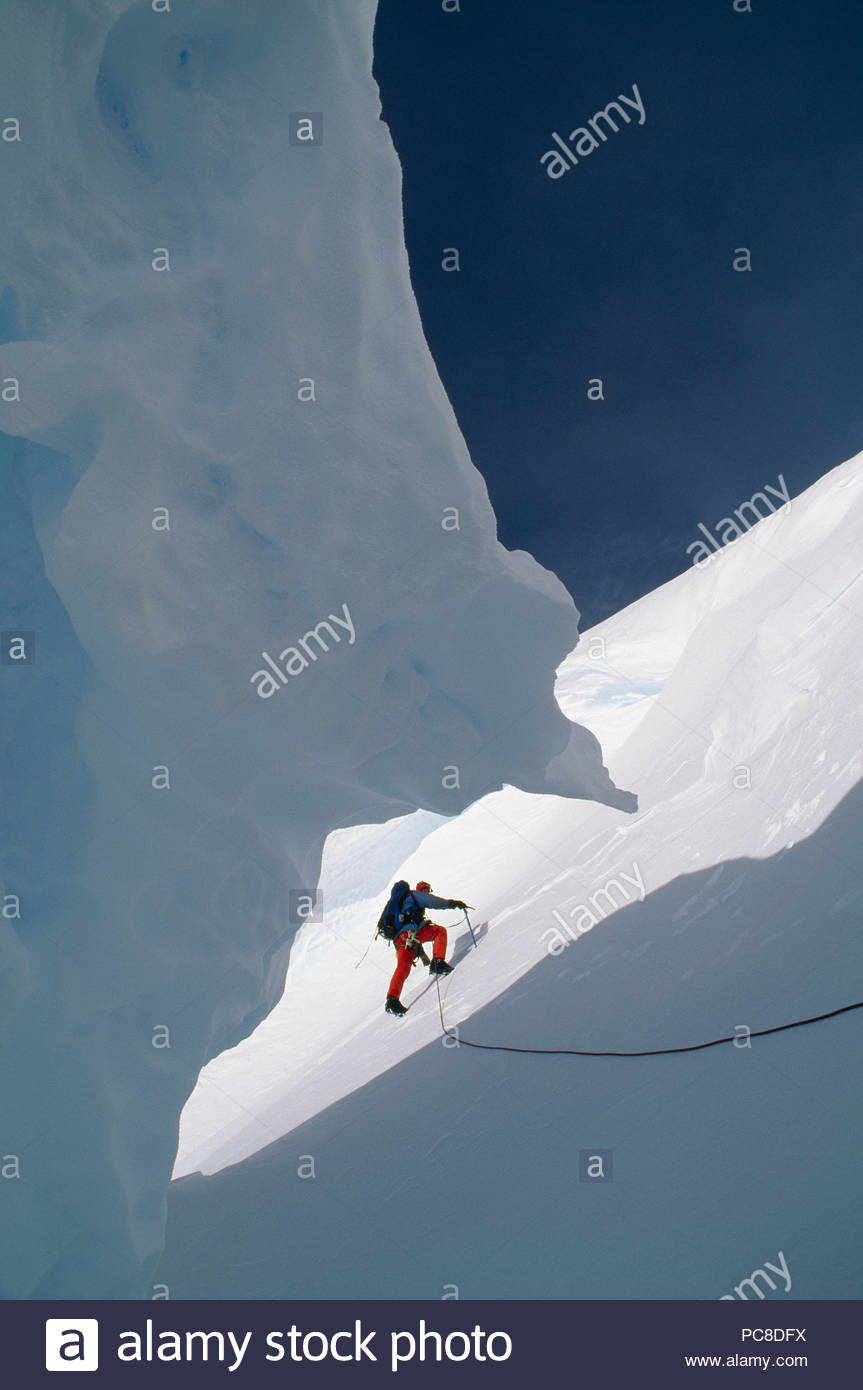 A climber emerges from a crevasse at Camp Gould. - Stock Image