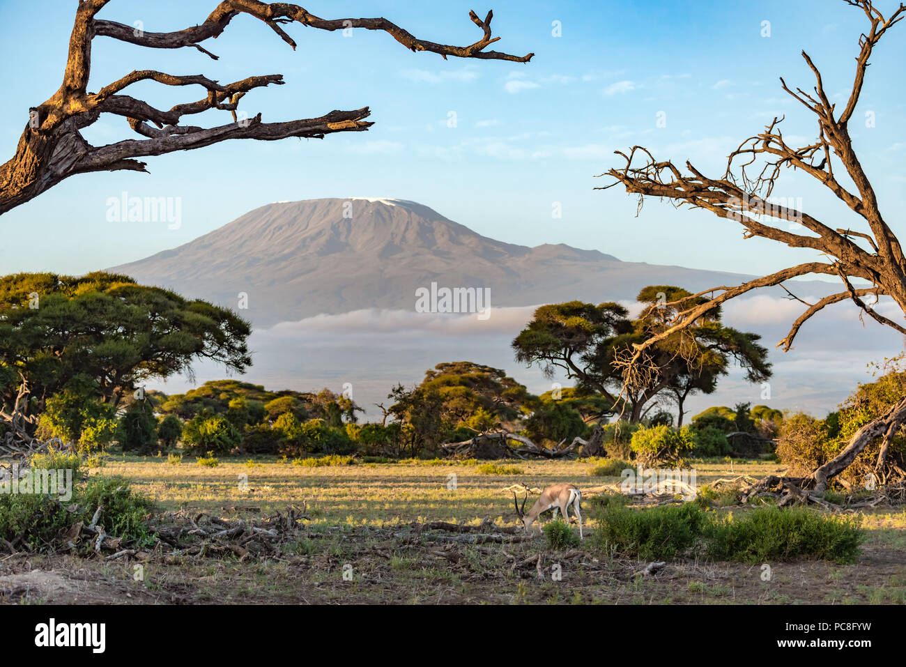 Mount Kilimanjaro in the Distance with an Antelope in the Foreground - Stock Image