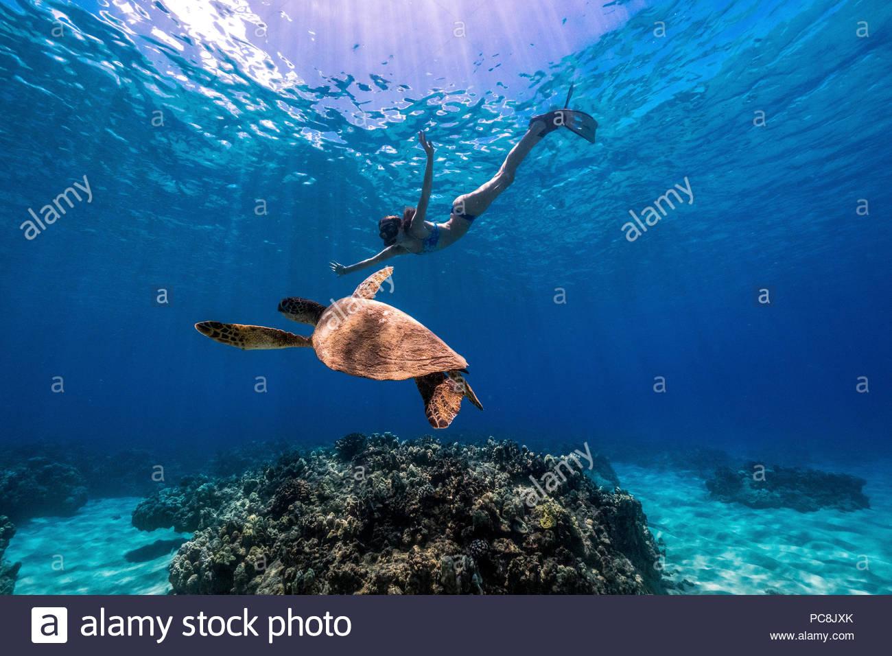 Woman Snorkeling Oahu Stock Photos Woman Snorkeling Oahu