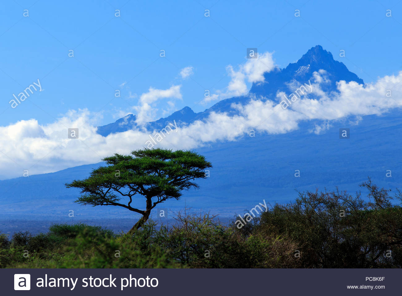 An Acacia tree, blue sky, and clouds around Mawenzi, the smaller peak of Mount Kilimanjaro. - Stock Image