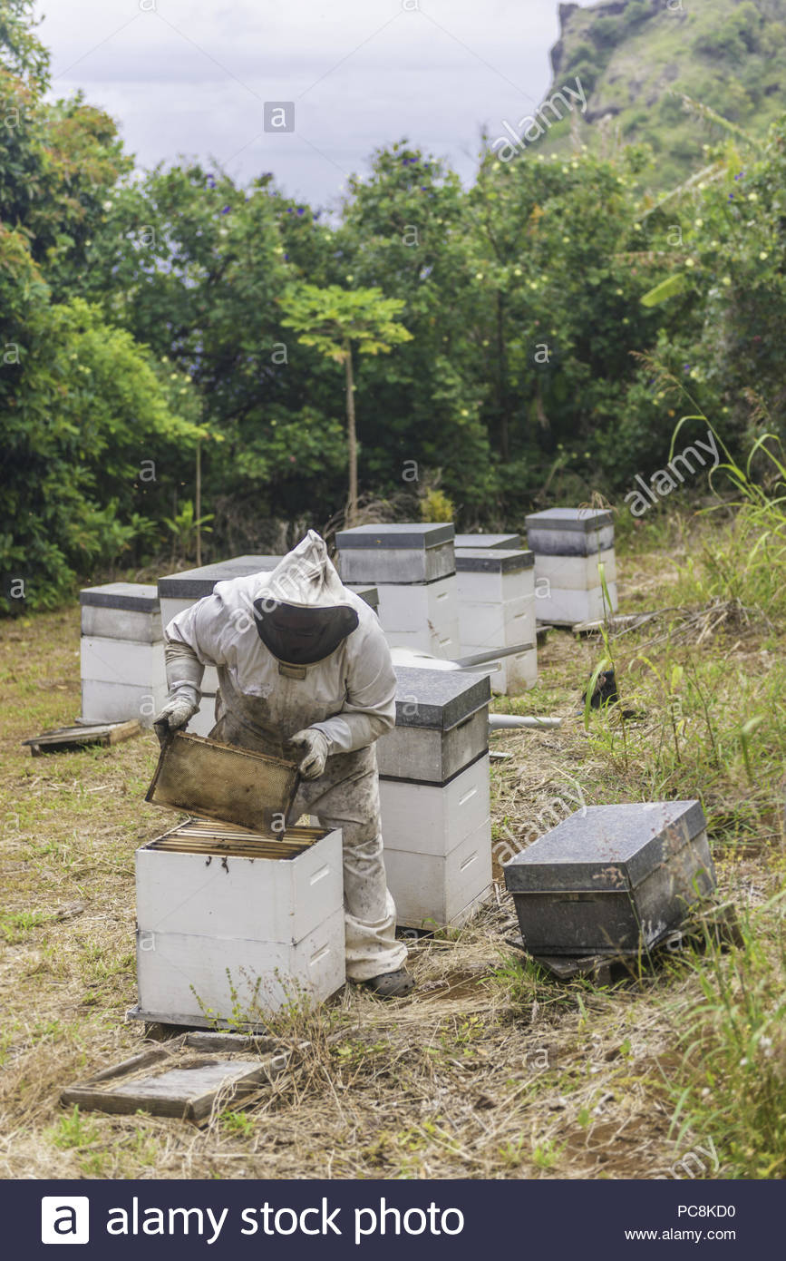 A seventh-generation descendant of the island raises pesticide free honeybees. - Stock Image
