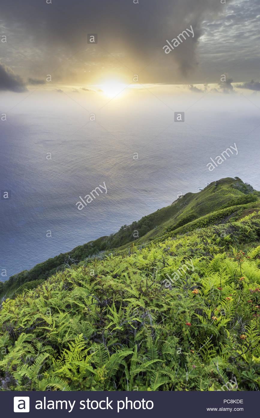 Wild lantana growing on the steep slopes near Highest Point. - Stock Image