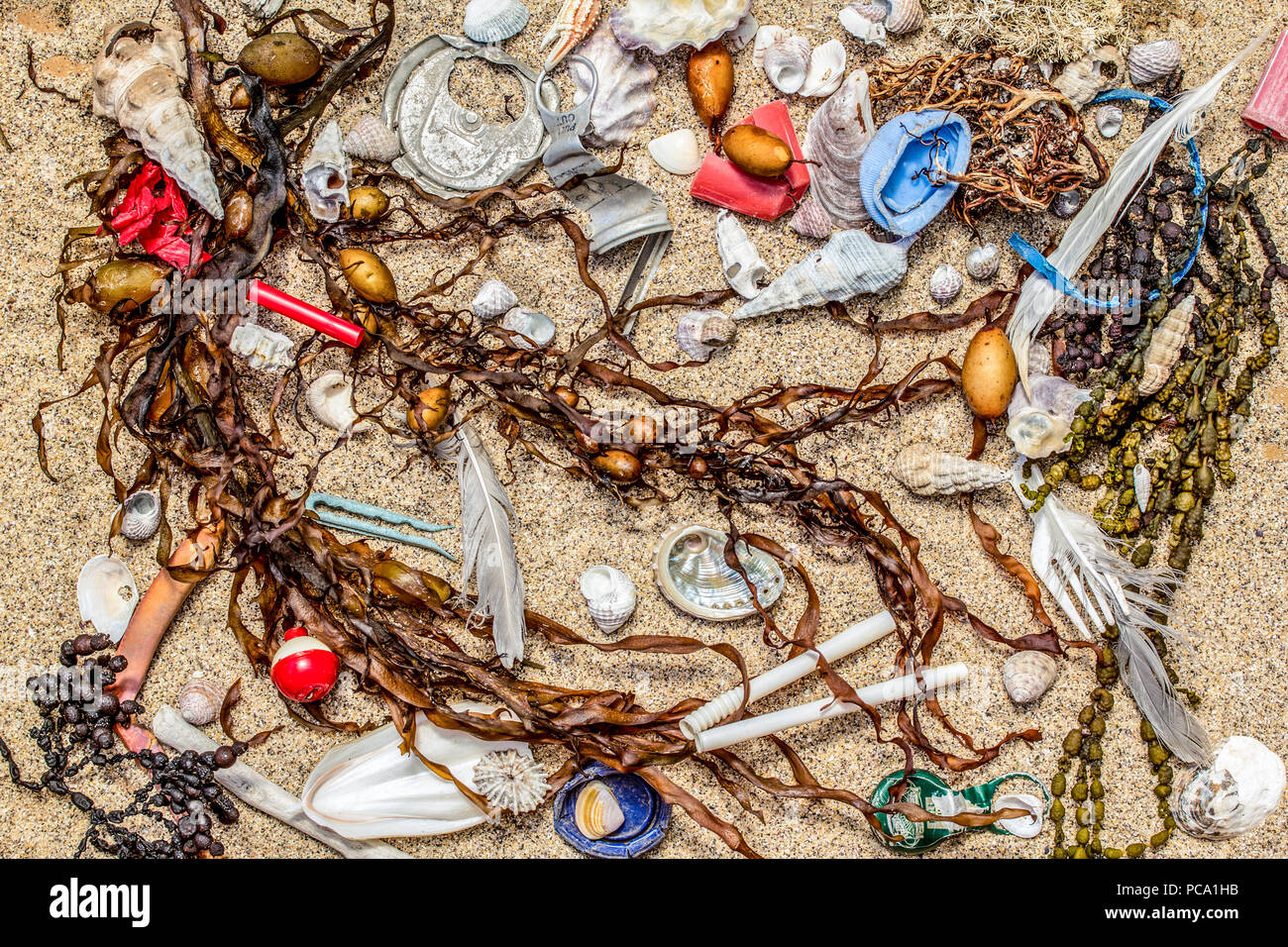 Real plastic pollution found on beach with natural beach seaweed and shells, space for text - Stock Image