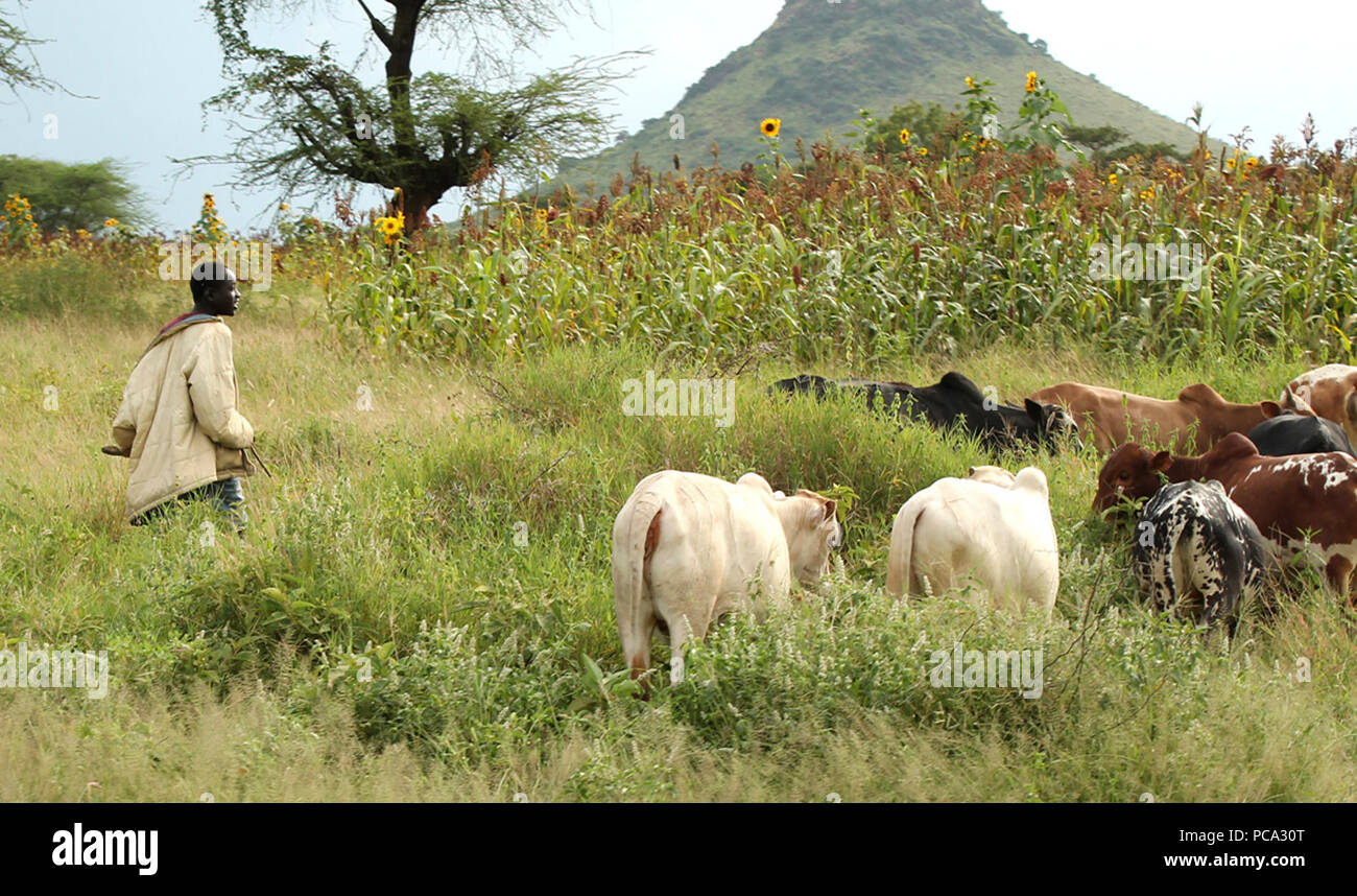 Agriculture au tchad. - Stock Image