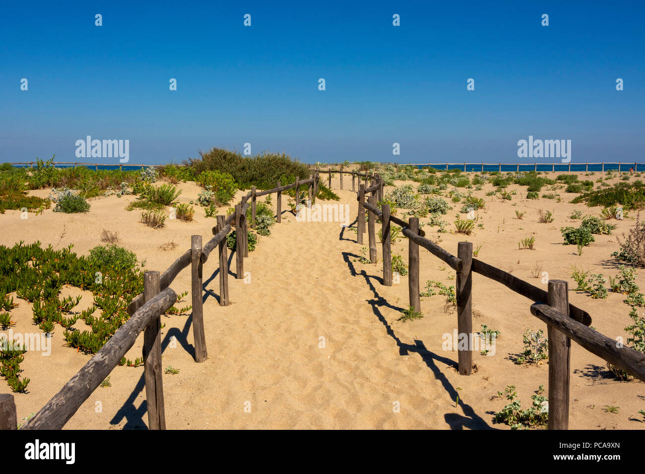Le Barcares. Fences for the protection of the dunes (Ganivelles) Pyrenees Orientales. Occitane. France - Stock Image