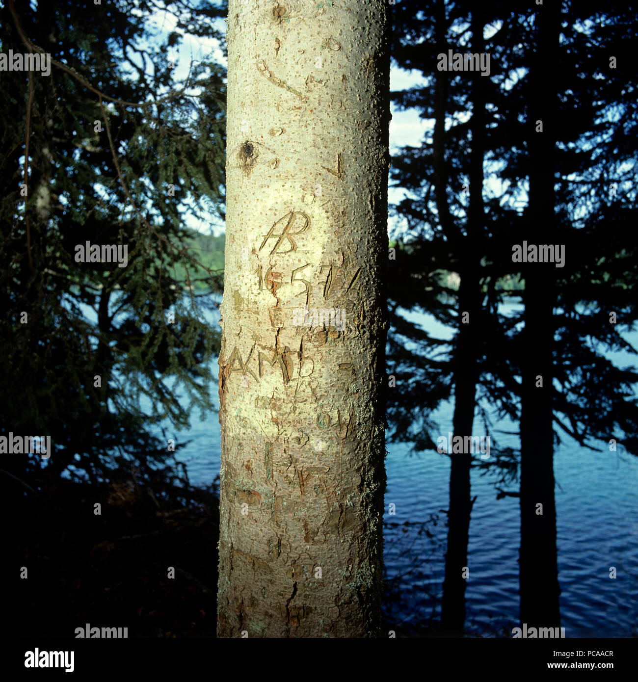 Initials carved into a tree trunk - Stock Image