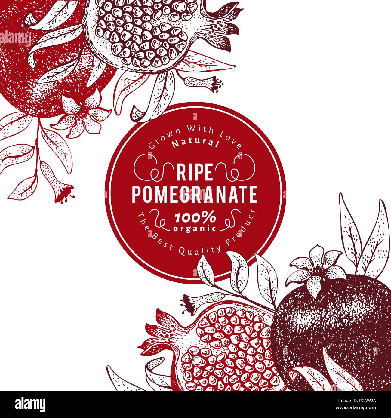 pomegranate fruit design template hand drawn vector fruit