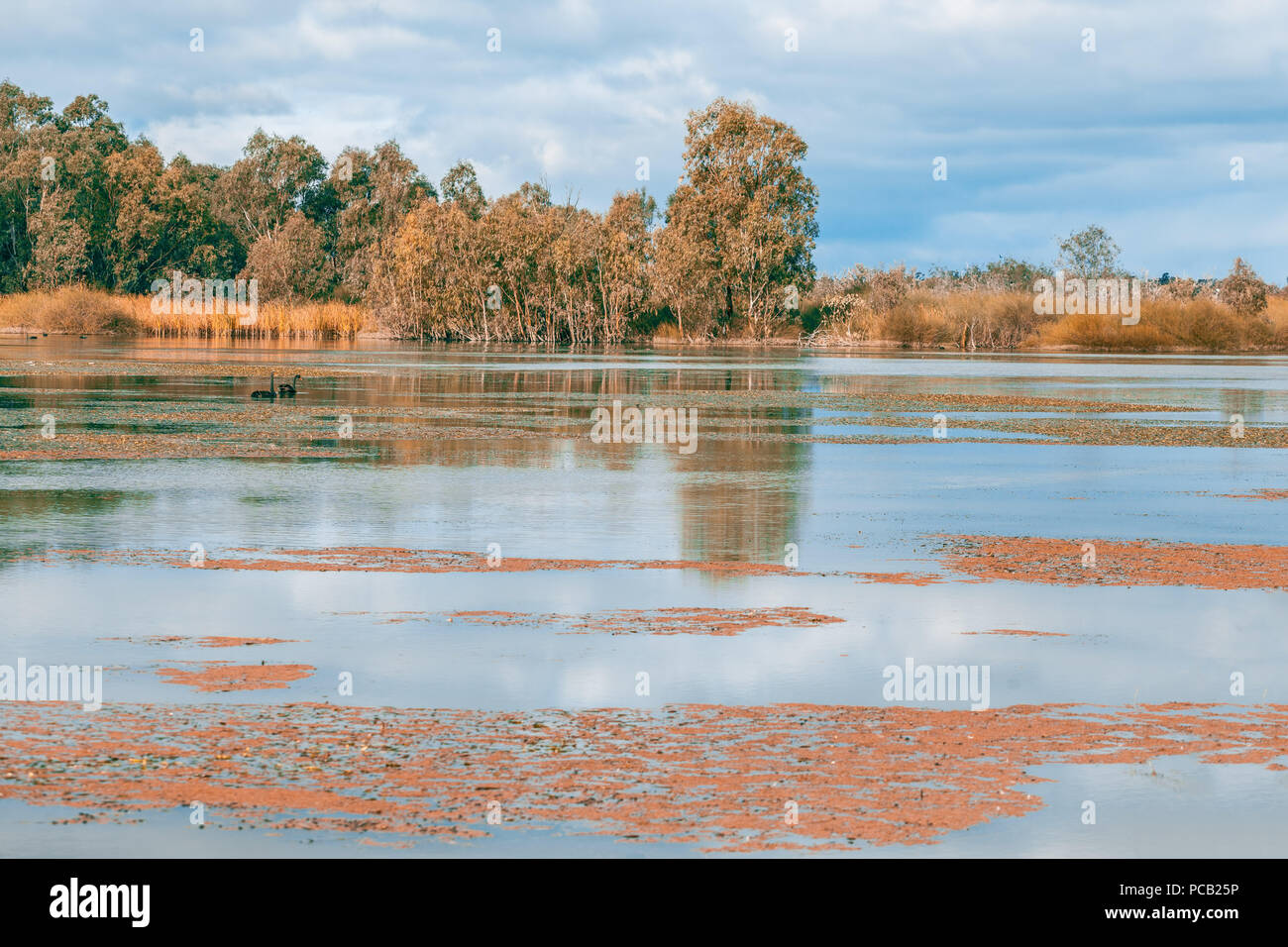 Beautiful nature reserve on Murray RIver at Banrock Station, Riverland, South Australia - Stock Image