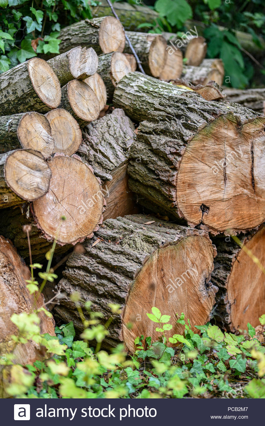 Pile of different sized logs piled up in an English wood awaiting splitting. - Stock Image