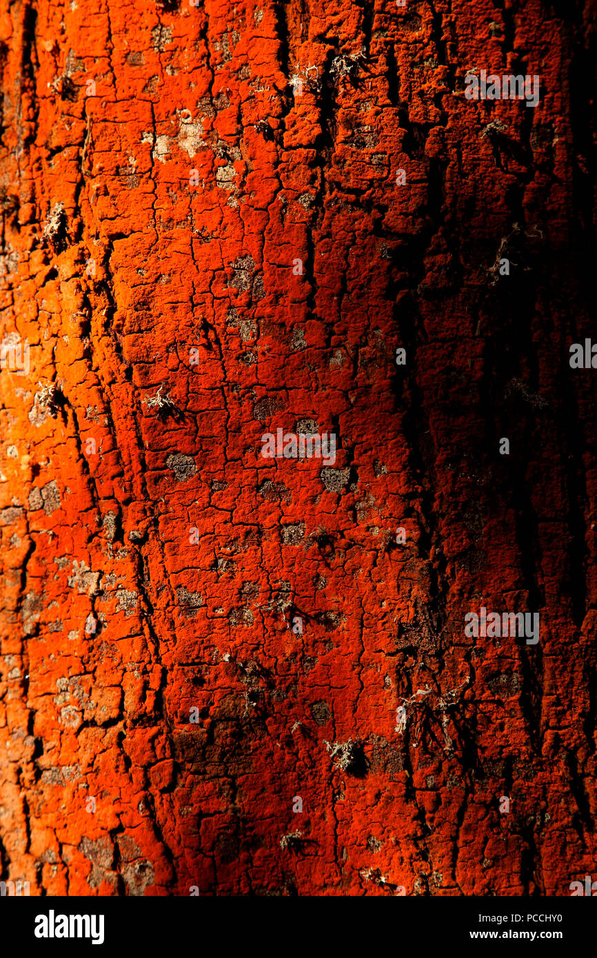 Tree pattern with natural lighting - Stock Image
