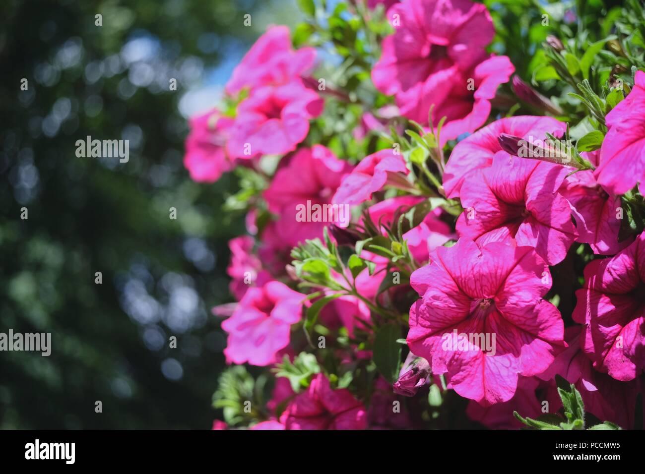 Some Beautiful Flowers Stock Photo 214180097 Alamy