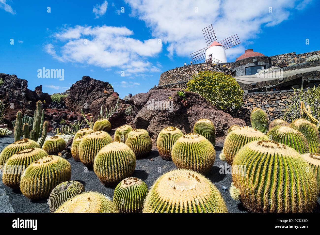 Jardin De Cactus Cactus Garden Cesar Manrique Lanzarote Canary