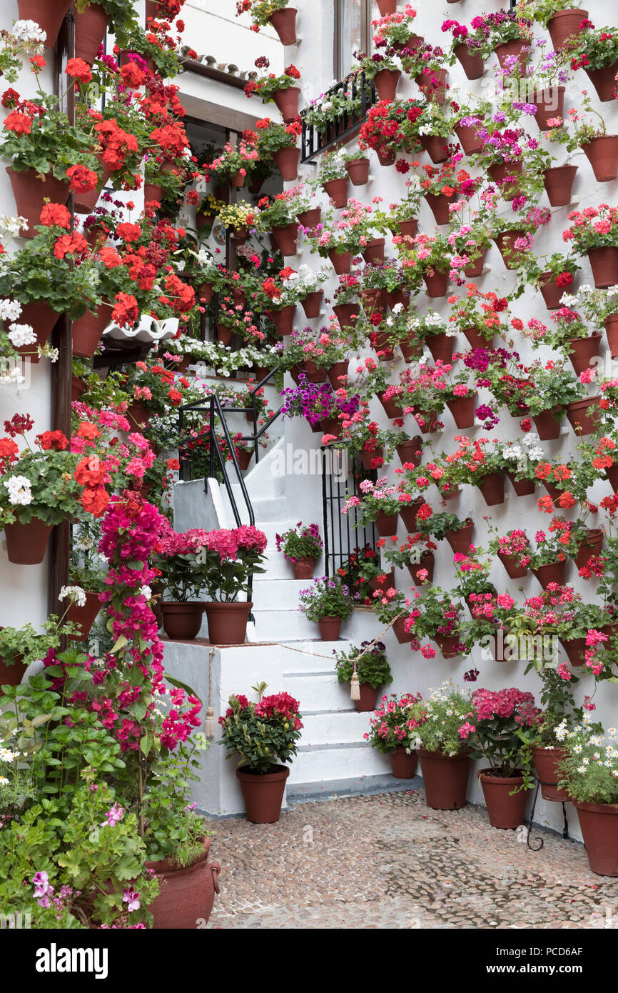 Colourful display of flowers at the Festival of the Patios, Cordoba, Andalucia, Spain, Europe - Stock Image