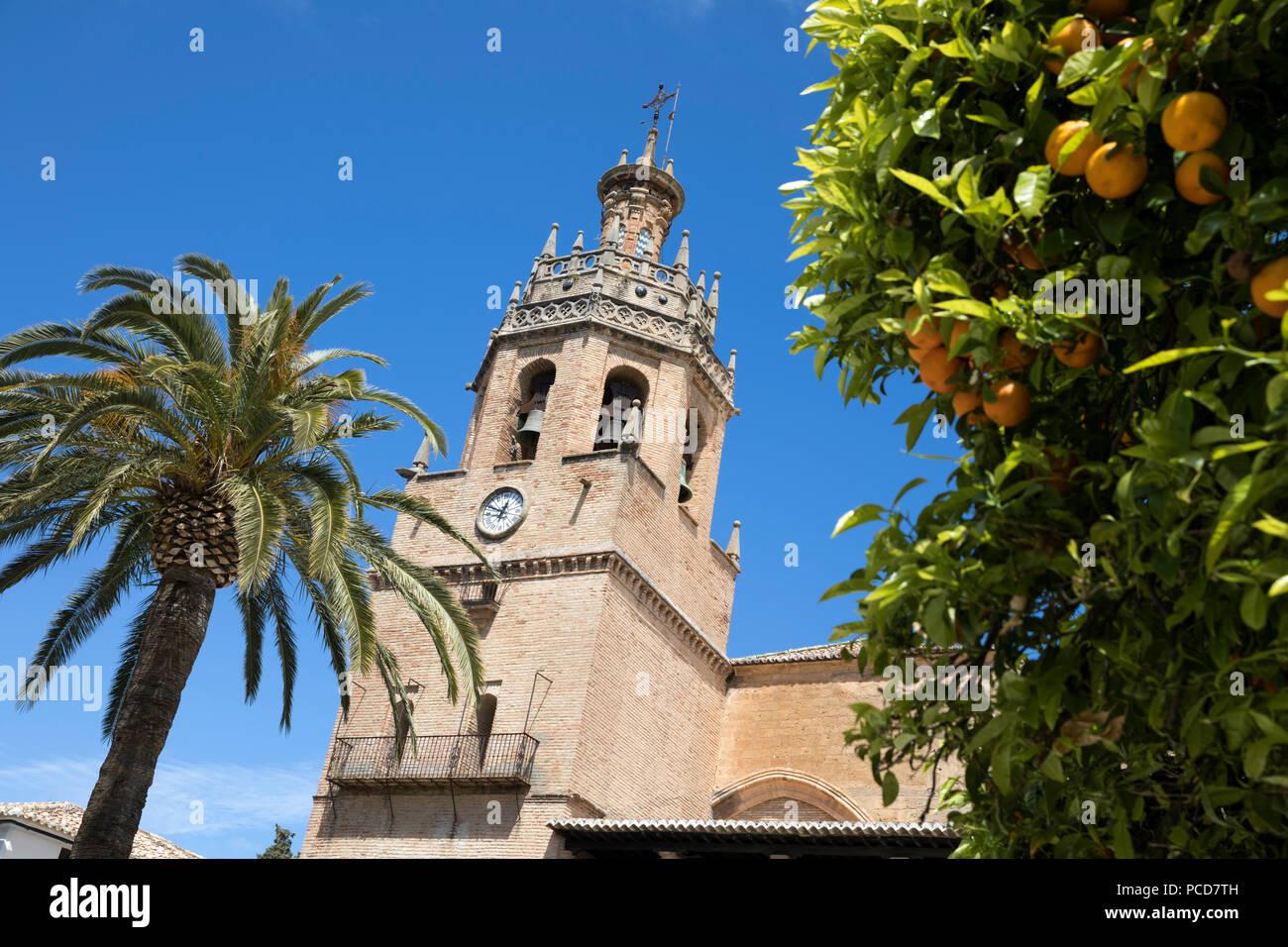 Palm tree and tower of the Iglesia de Santa Maria la Mayor, Ronda, Andalucia, Spain, Europe - Stock Image