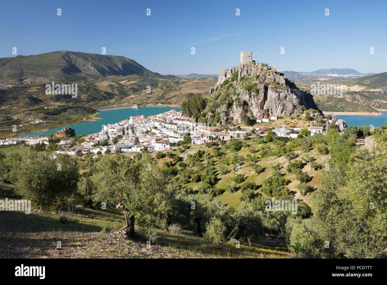 Moorish castle above white village with olive groves, Zahara de la Sierra, Sierra de Grazalema Natural Park, Andalucia, Spain, Europe - Stock Image