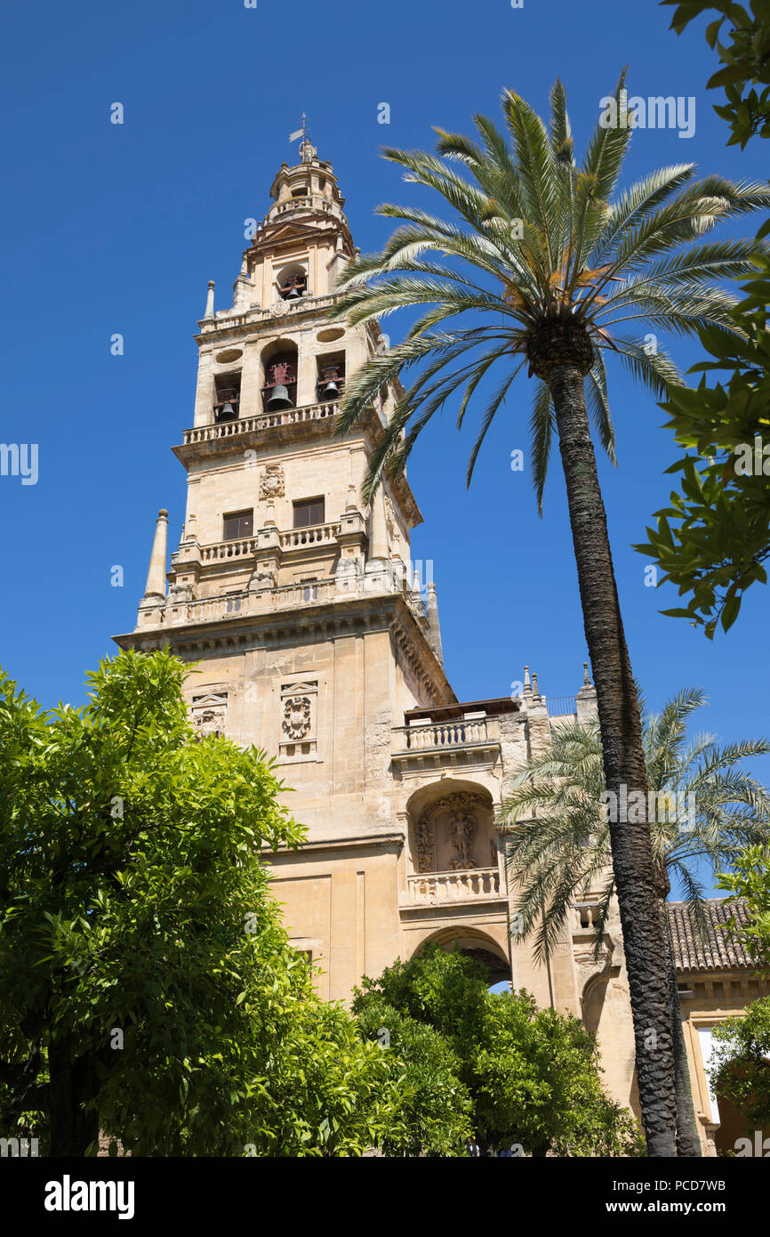 Torre del Alminar belfry of the Mezquita viewed from the Patio de los Naranjos, Cordoba, Andalucia, Spain, Europe - Stock Image