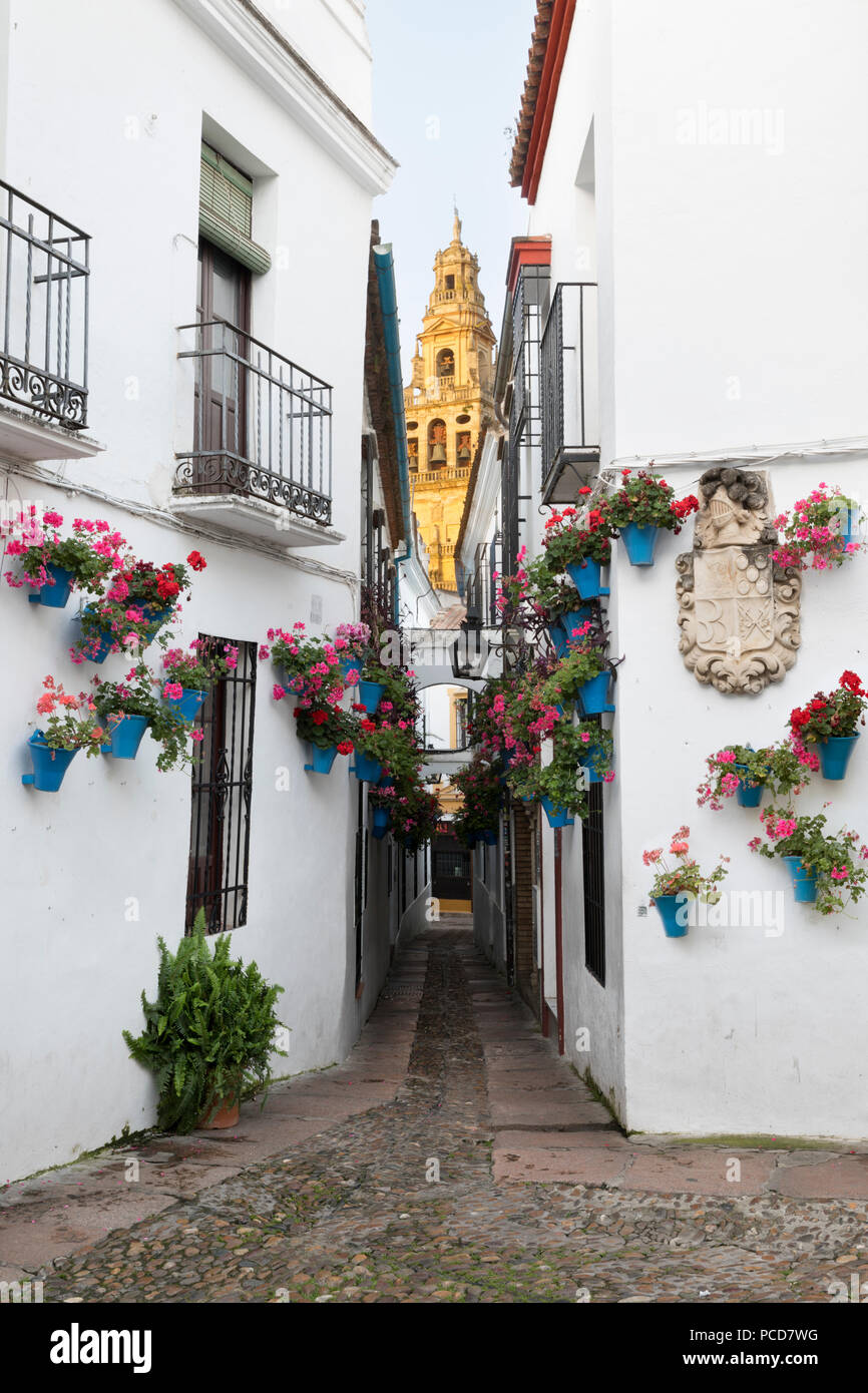 Calleja de las Flores and the Mezquita, Cordoba, Andalucia, Spain, Europe Stock Photo