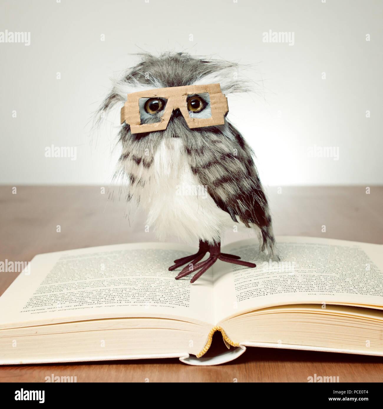 education,reading,owl,educated - Stock Image