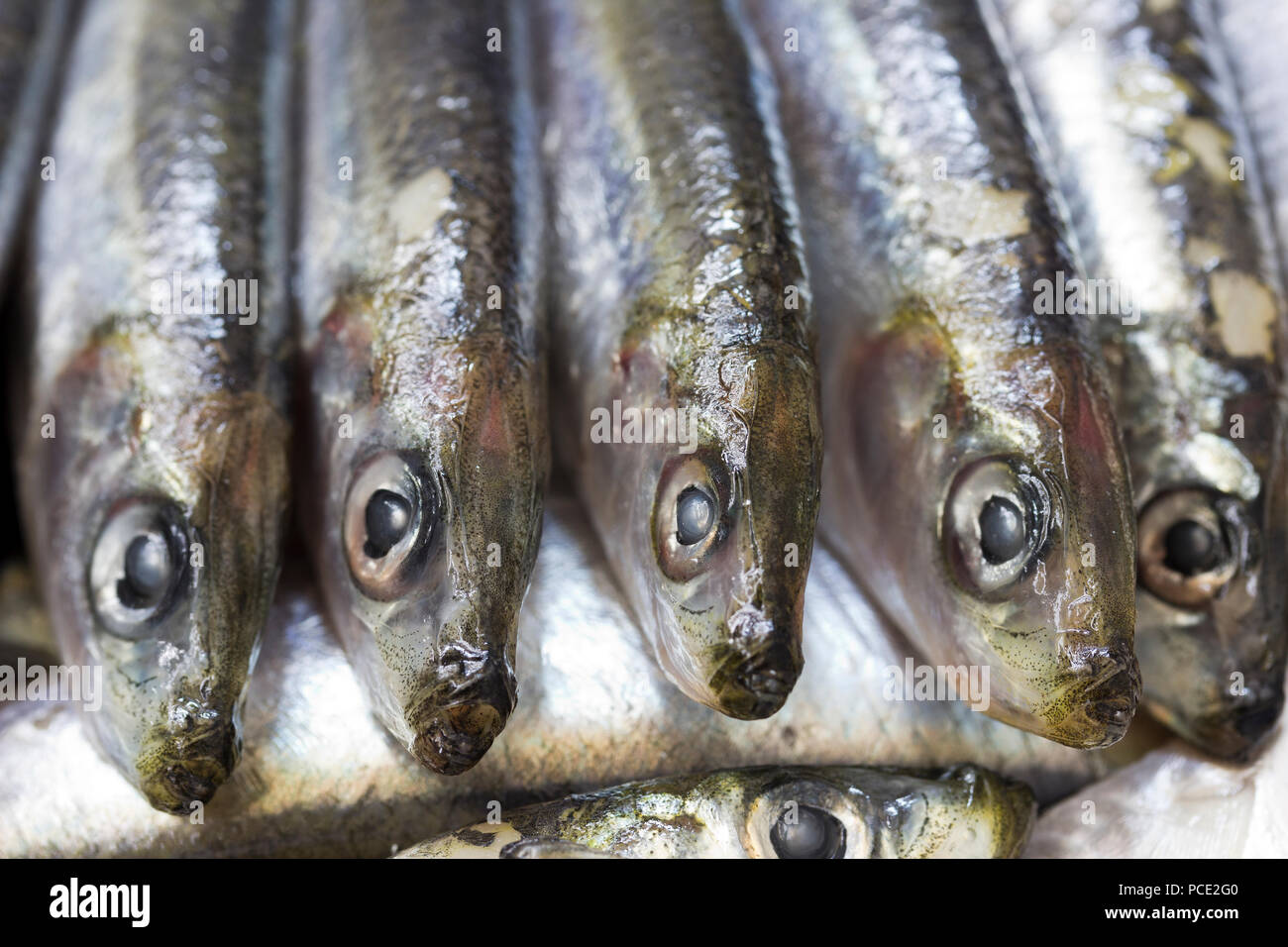 Close-up of fresh blue fish - sardines - Stock Image