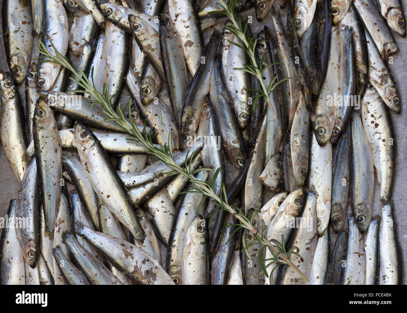 Sardines, seasoned and ready for oven - Stock Image