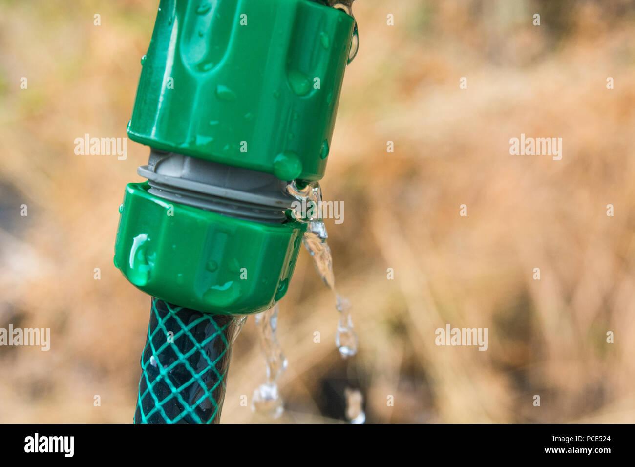 Leaking garden hosepipe spray gun hose - as metaphor for 2018 heatwave and UK drought, and hosepipe ban. - Stock Image