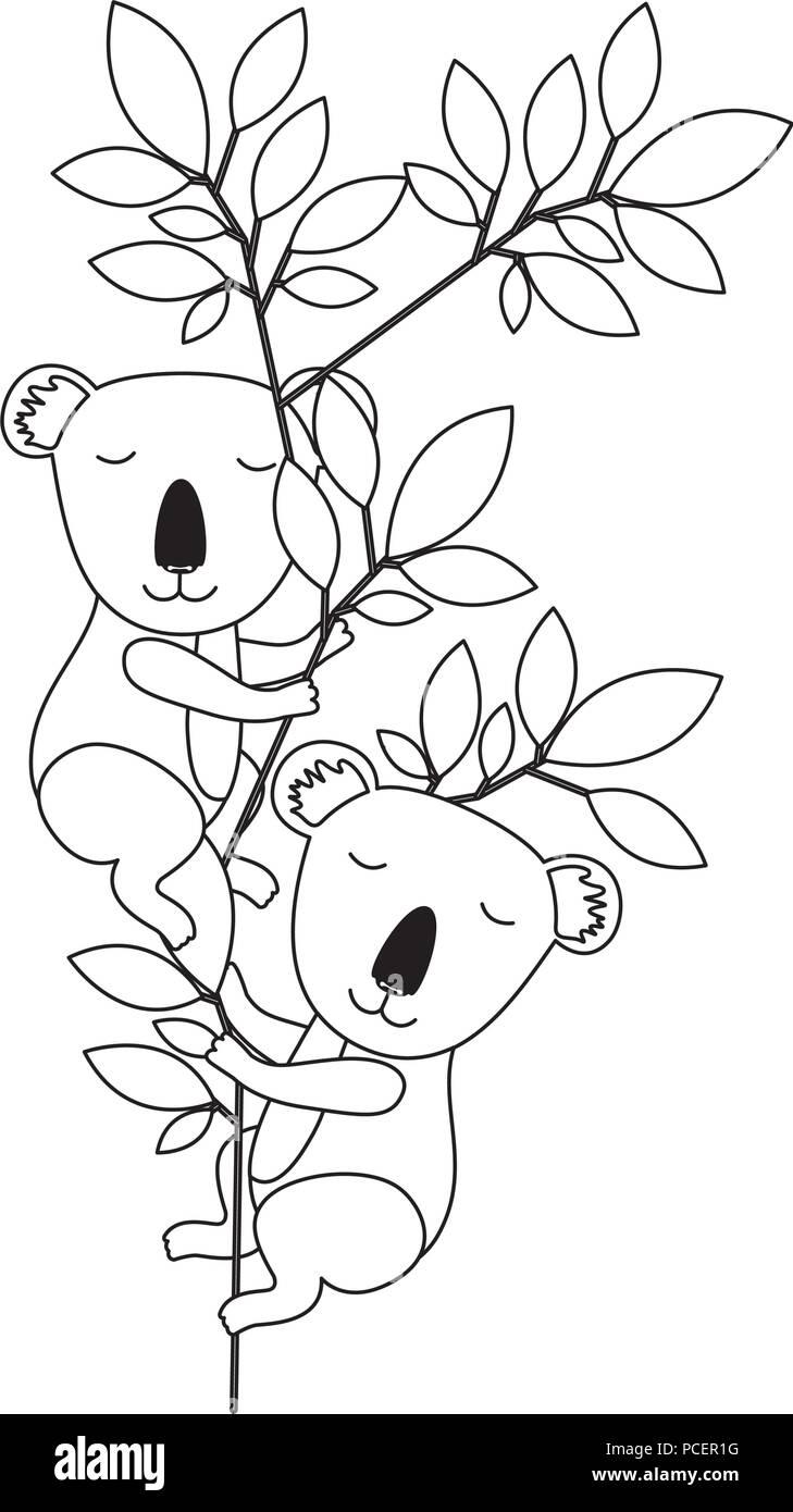 wild koalas couple in the jungle - Stock Image