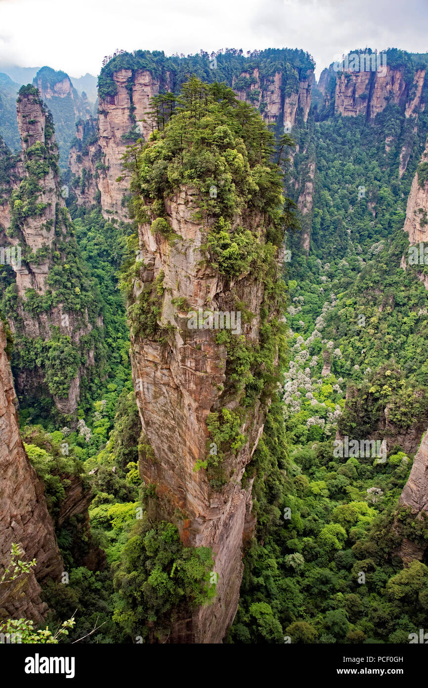 The famous pillar of Avatar Floating Mountain in Zhangjiajie National Forest Park, Hunan Province China - Stock Image